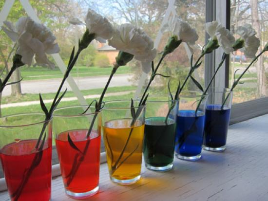 food coloring projects